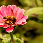 Krásná a zdravá díky medu