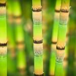 Zabalte se do hebkého bambusu