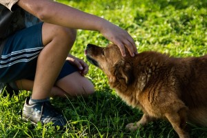 Jaká psí plemena jsou vhodná do rodiny s dětmi?