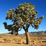 stromový horoskop