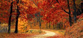 Jak se připravit na podzimní období? Nastartujte svůj imunitní systém