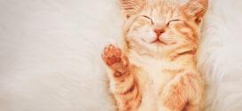 Selhání ledvin u kočky. Jak na to?
